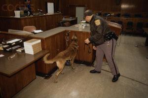 Меры безопасности перед судом серийного убийцы Дамера Джеффри проверка на взрывчатку.