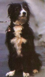 Собака маньяка Денниса Нильсена по кличке Блип.