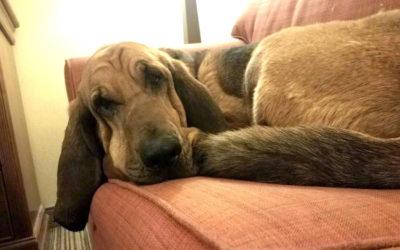 Скандалы и криминал: Полицейский и его собака по имени Джесси оказались в нужном месте в нужное время