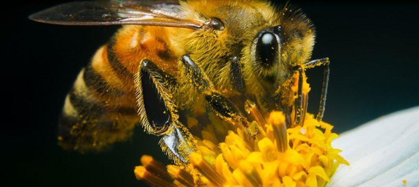 Скандалы и криминал: Рой пчел отправил пятерых пострадавших человек в калифорнийскуюбольницу
