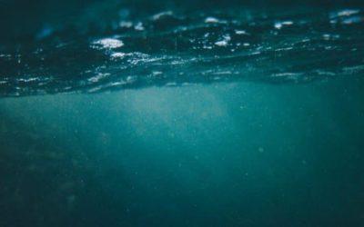 Криминальные новости: Полицейские обнаружили тело 12-летнего подростка, который погиб в озере Джорджии